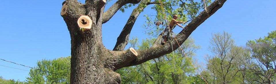 A Atlantic Tree Services